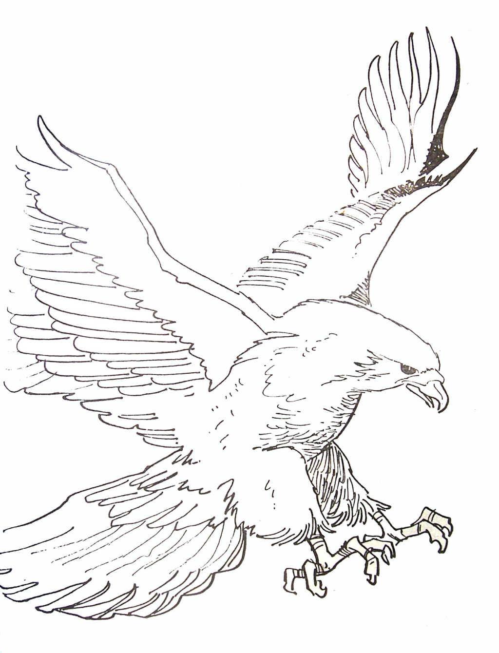 55 dibujos de Águilas para colorear | Oh Kids | Page 4