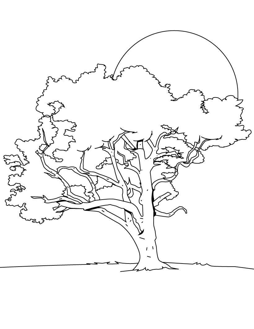 66 dibujos de Árboles para colorear   Oh Kids   Page 5