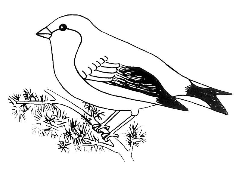 119 dibujos de aves para colorear oh kids page 1. Black Bedroom Furniture Sets. Home Design Ideas