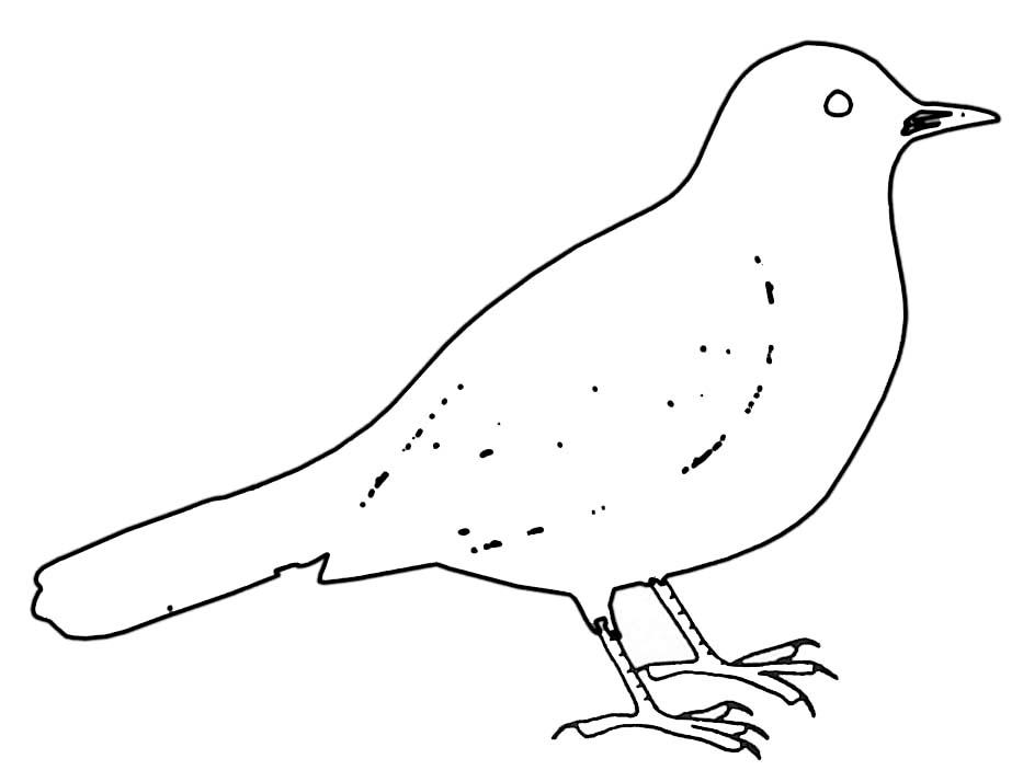 119 dibujos de Aves para colorear | Oh Kids | Page 1