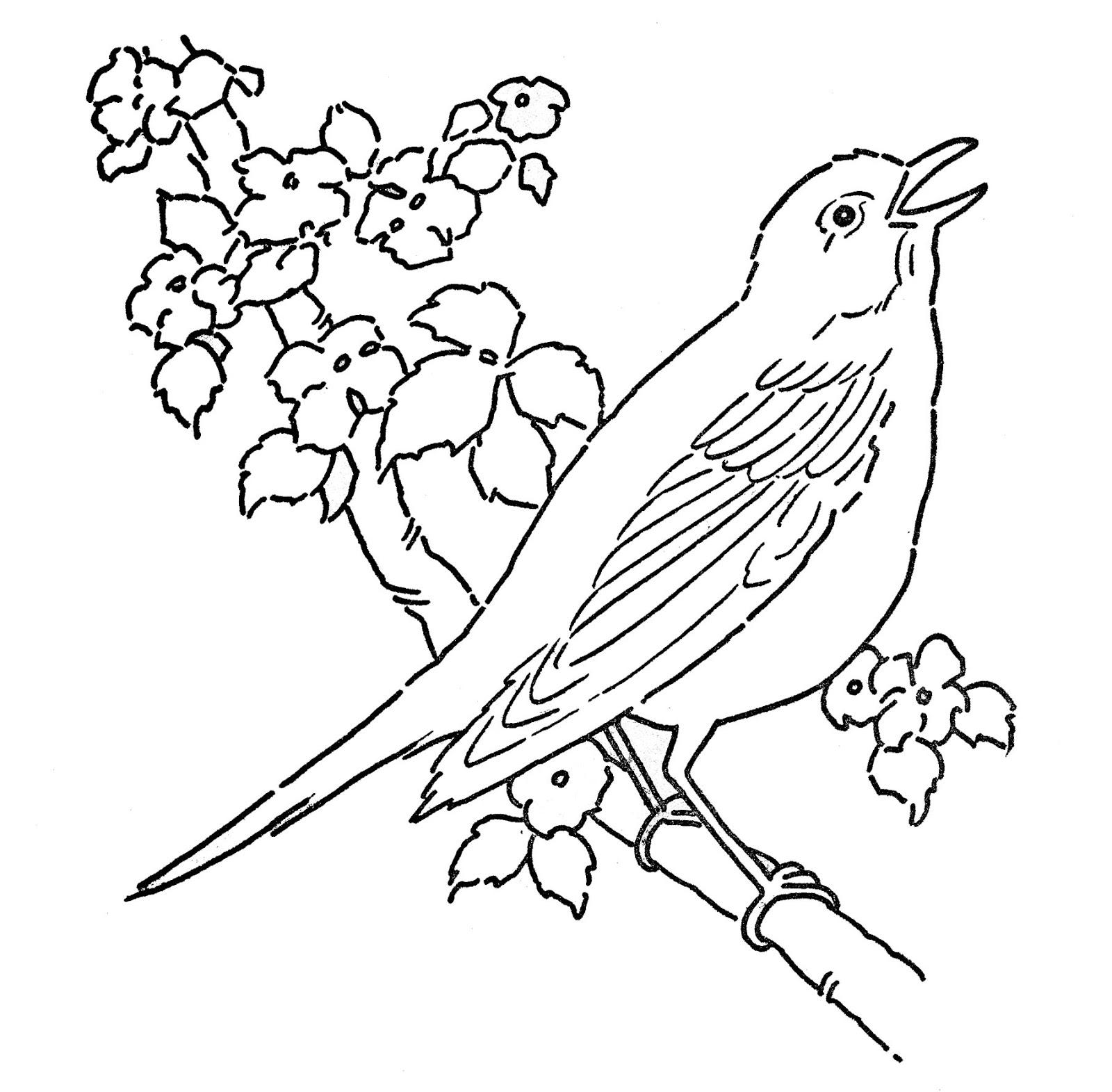 119 dibujos de Aves para colorear   Oh Kids   Page 13