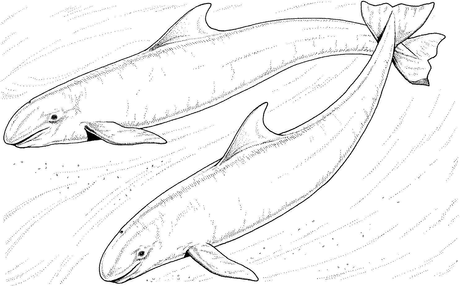 247 dibujos de Ballenas para colorear | Oh Kids | Page 20