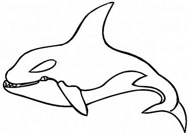 coloring pages of shamu - 247 dibujos de ballenas para colorear oh kids page 27