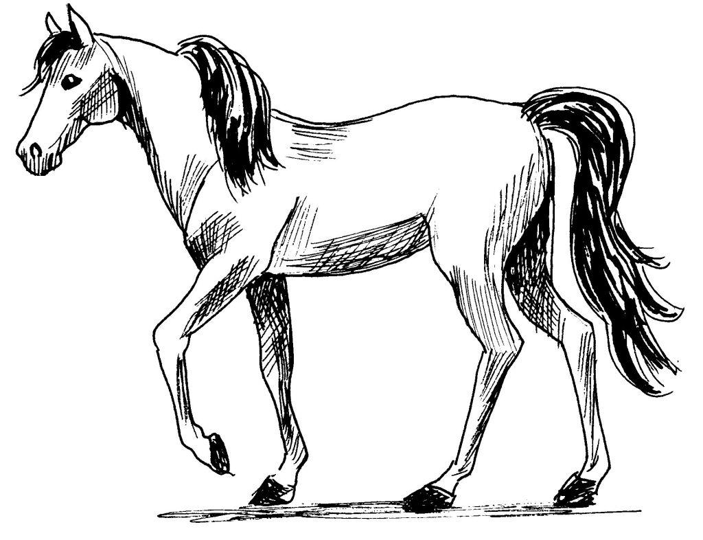 296 dibujos de caballos para colorear oh kids page 14 - Comment dessiner un cheval au galop ...