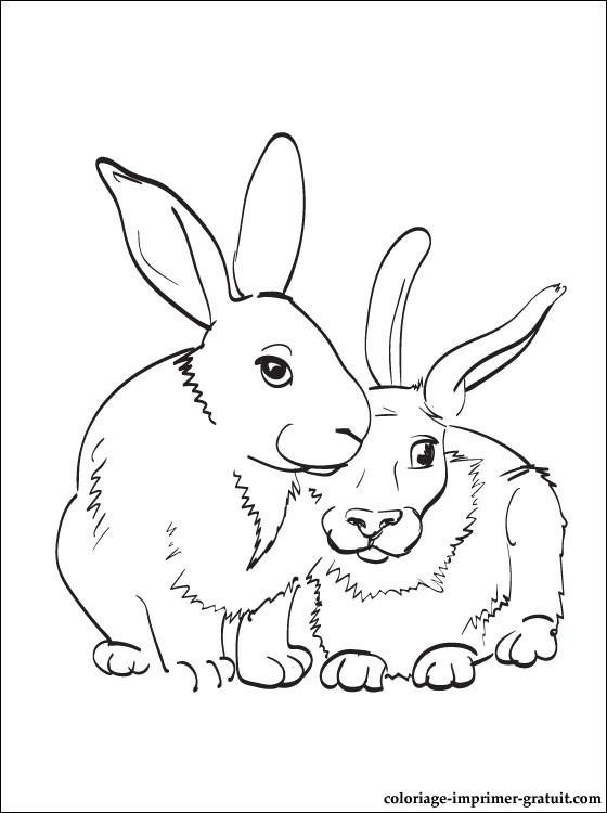 128 dibujos de Conejos para colorear   Oh Kids   Page 6