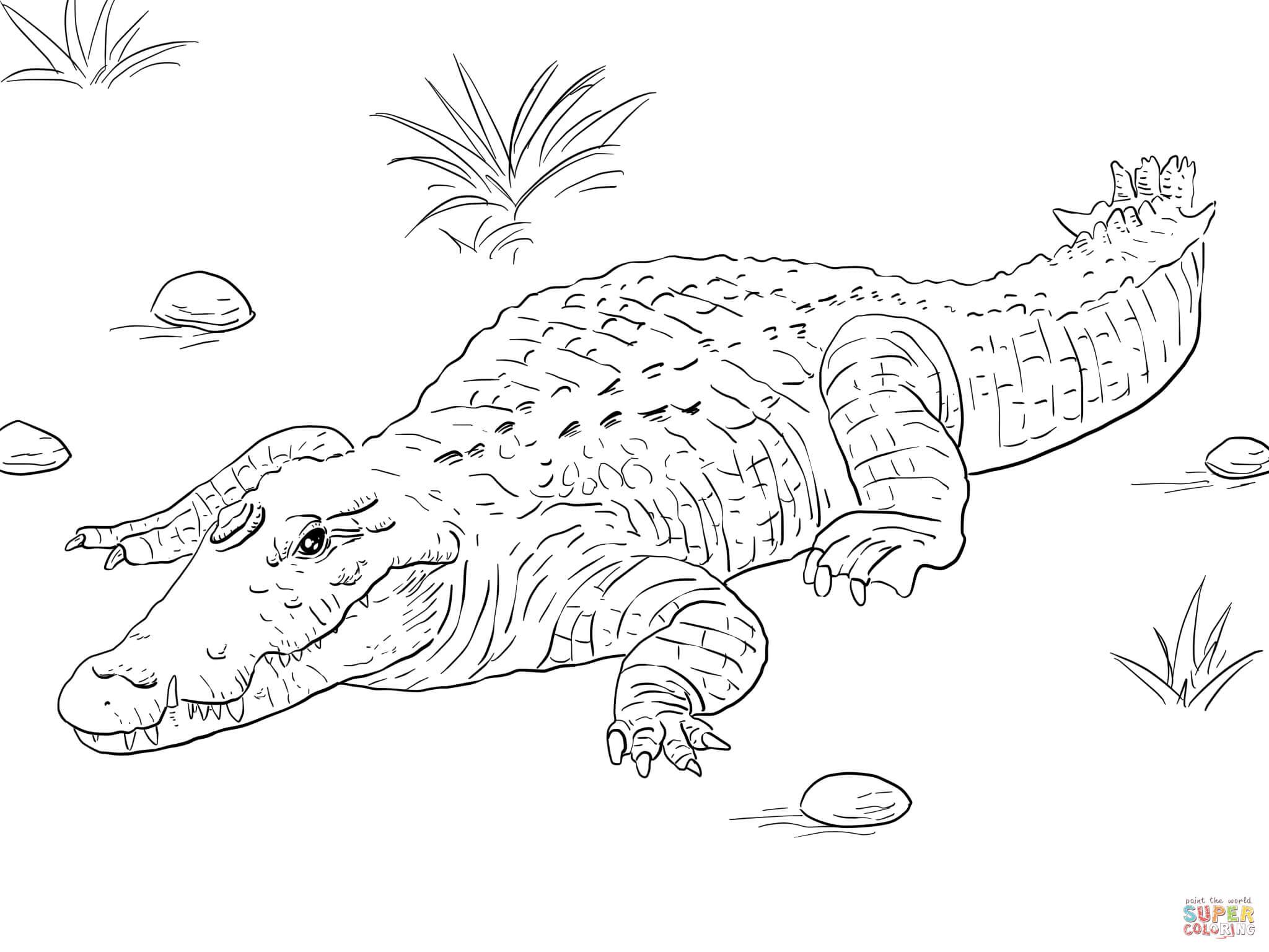crocidile coloring pages for kids | 106 dibujos de Cocodrilos para colorear | Oh Kids | Page 4