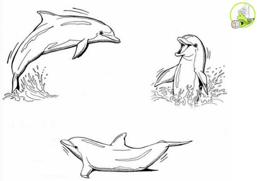 Asombroso Libre Delfín Para Colorear Composición - Ideas Para ...