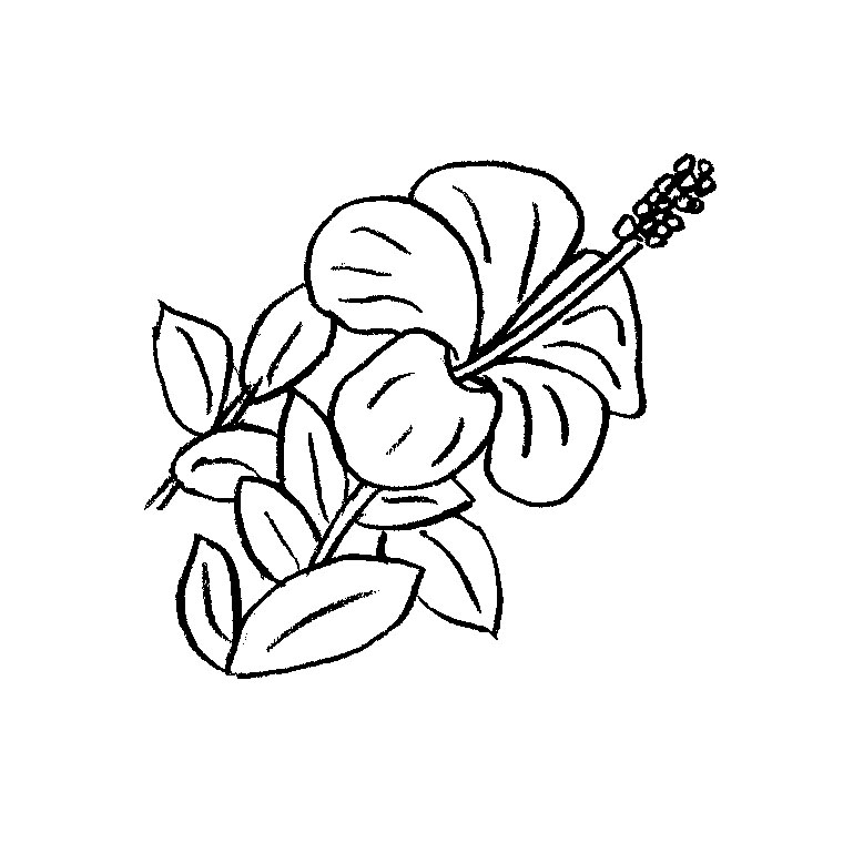74 dibujos de flores para colorear oh kids page 2 - Coloriage tahiti ...
