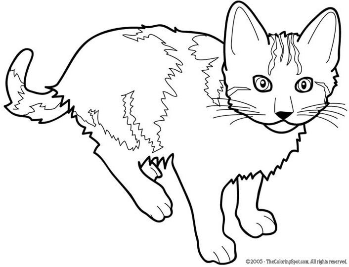 gatos para colorear y imprimir