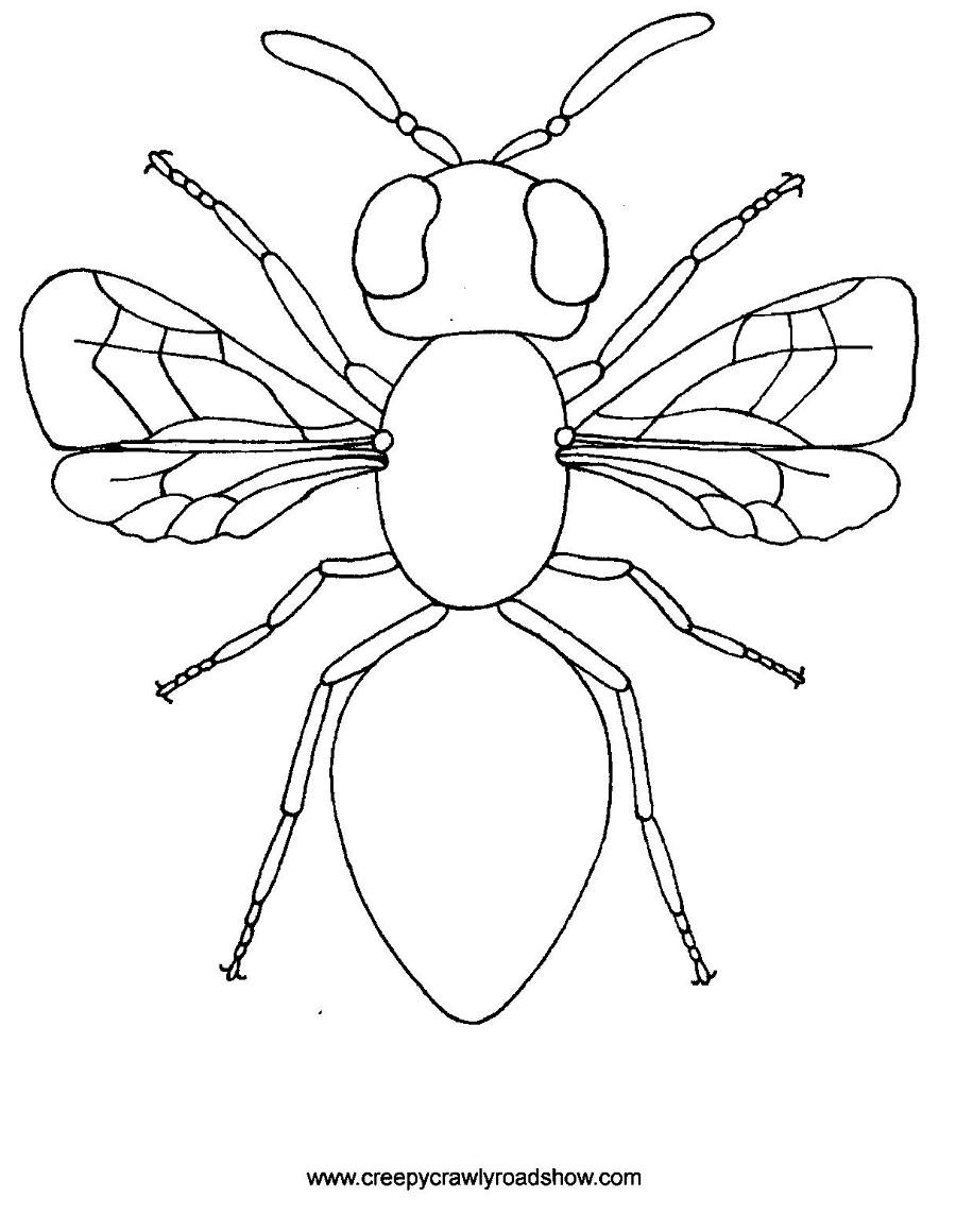 56 dibujos de insectos para colorear oh kids page 3. Black Bedroom Furniture Sets. Home Design Ideas