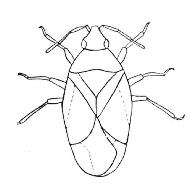 56 Dibujos De Insectos Para Colorear Oh Kids Page 6