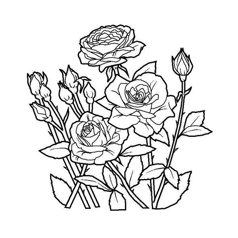 33 dibujos de jardines para colorear oh kids page 3