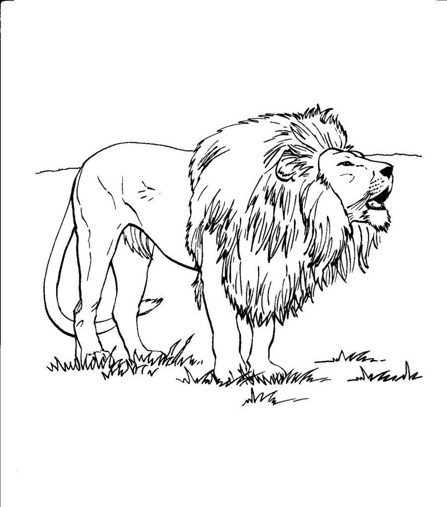 108 dibujos de Leones para colorear | Oh Kids | Page 7