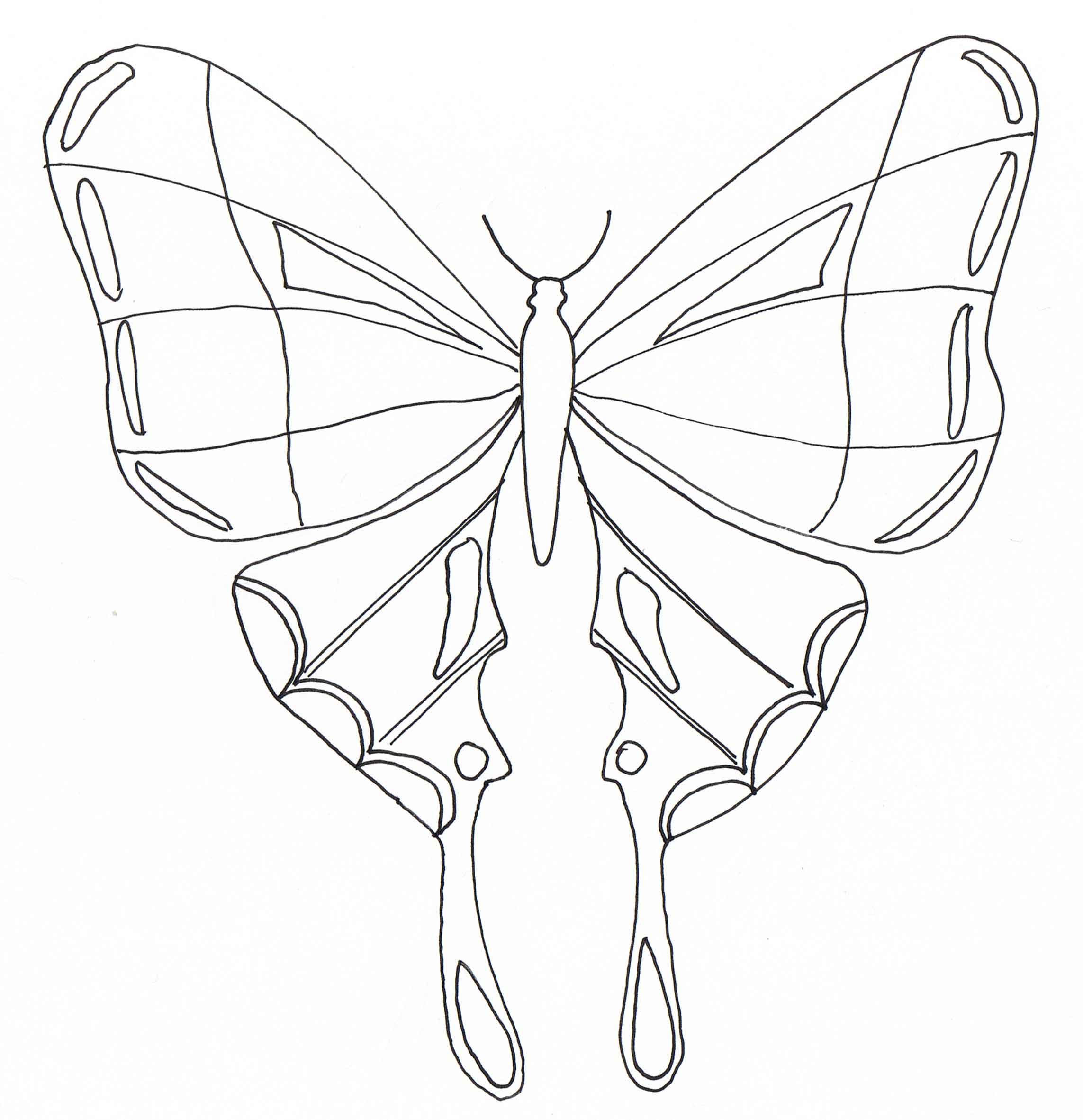 Dibujos Sencillos De Mariposas