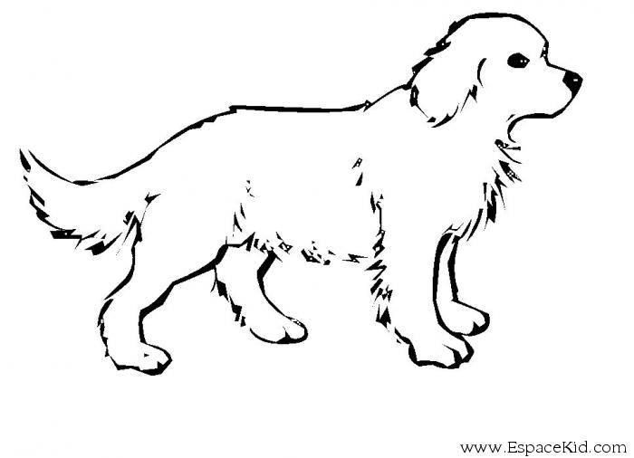Dibujos Infantiles De Perros Para Colorear: 302 Dibujos De Perros Para Colorear