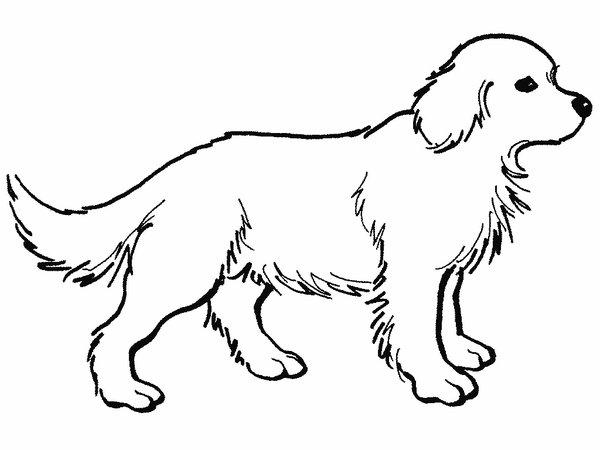 302 Dibujos De Perros Para Colorear Oh Kids Page 6