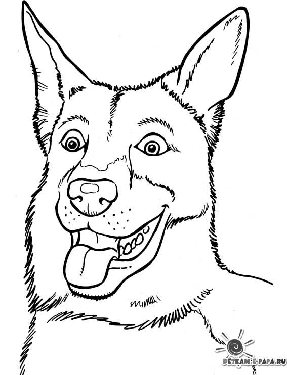 302 dibujos de Perros para colorear   Oh Kids   Page 33