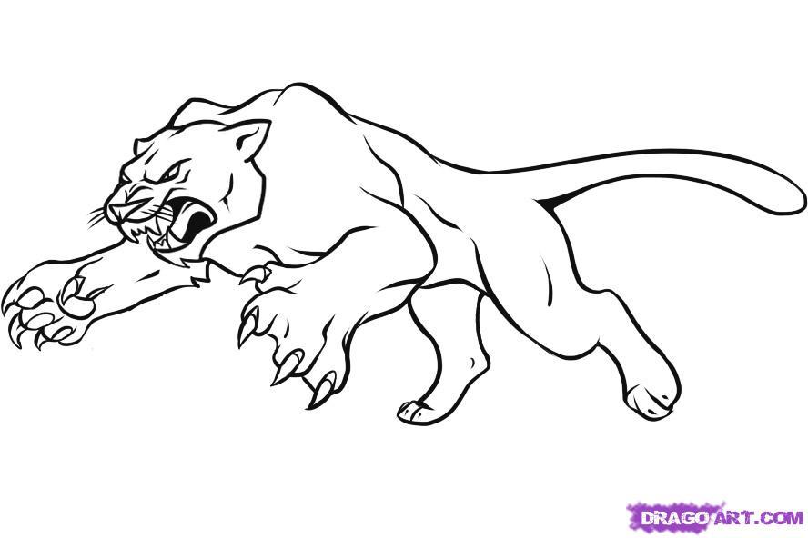 Cougar Face Line Drawing : Dibujos de pumas para colorear oh kids page