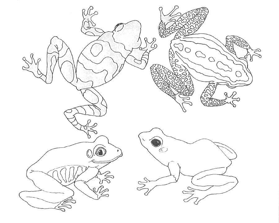73 dibujos de Ranas para colorear | Oh Kids | Page 4