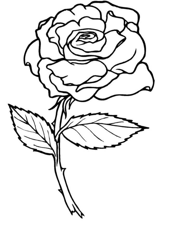 57 dibujos de Rosas para colorear | Oh Kids | Page 4