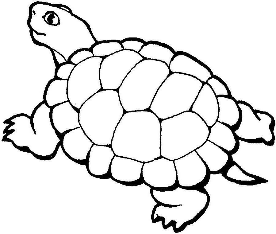69 Dibujos De Tortugas Para Colorear Oh Kids Page 1
